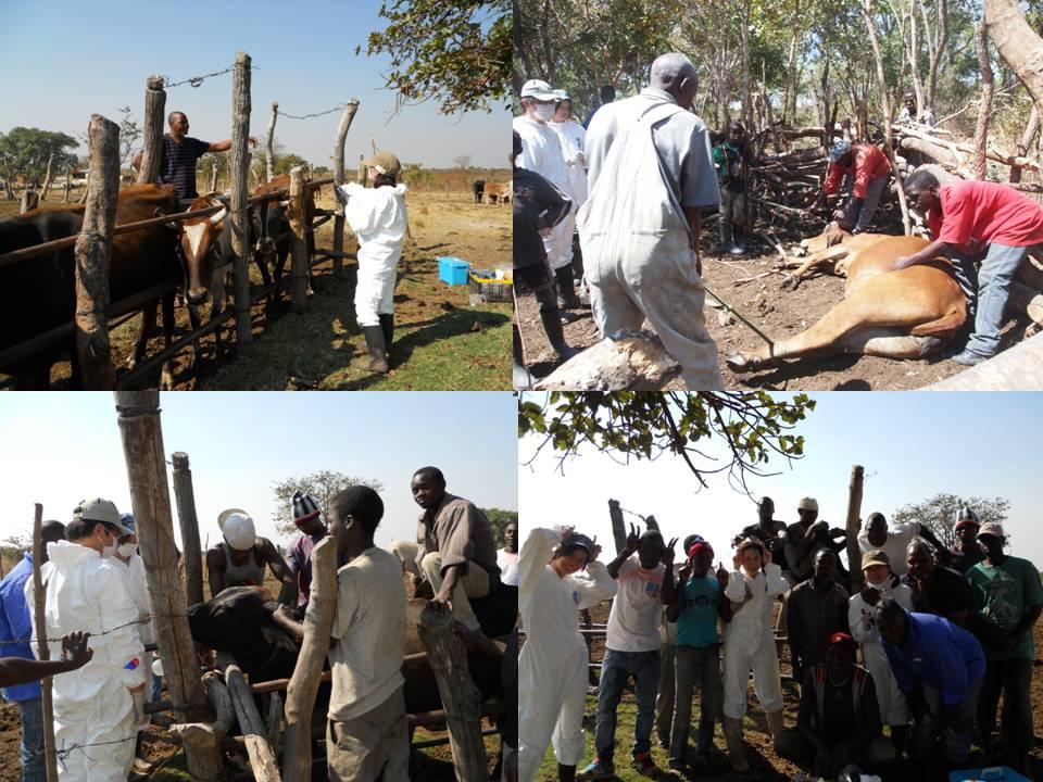 ザンビア共和国における環境汚染調査とシンポジウムの参加②